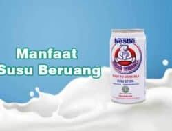 5 Manfaat Susu Beruang Untuk Tubuh Yang Tak Disangka